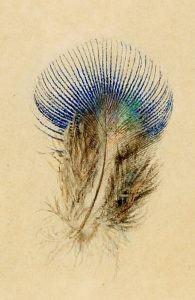 John Ruskin Study of a Peacock's Breast Feather 1873 Watercolour on paper © Collection of the Guild of St George / Museums Sheffield