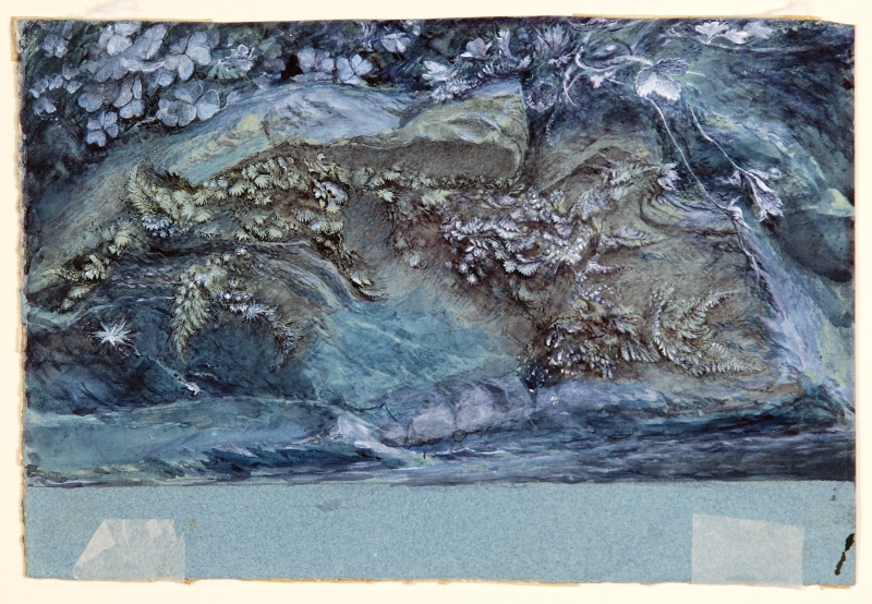 John Ruskin Study of Moss, Fern and Wood-Sorrel, upon a Rocky River Bank 1875-79 Pen, ink, watercolour and body colour on paper © Collection of the Guild of St George / Museums Sheffield